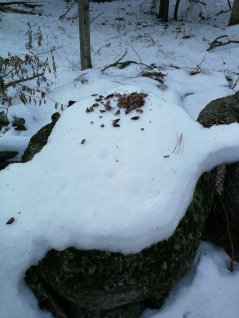 a red squirrel was here